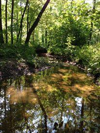 Creek Behind Dad's